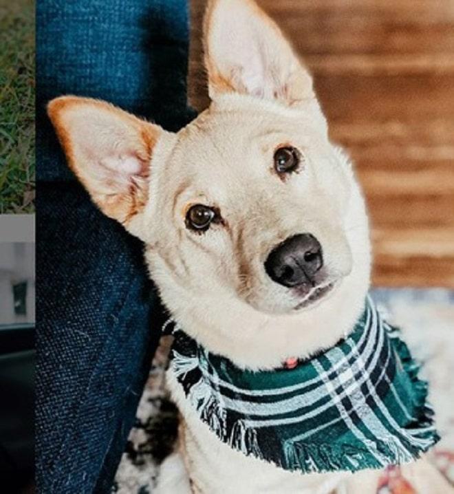 Собака с хусточкой