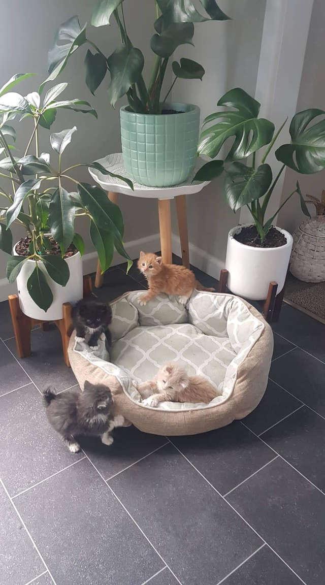 четверо котят
