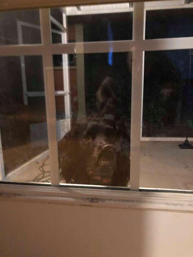 пес за дверью