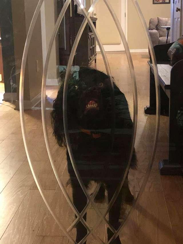 собака за дверью