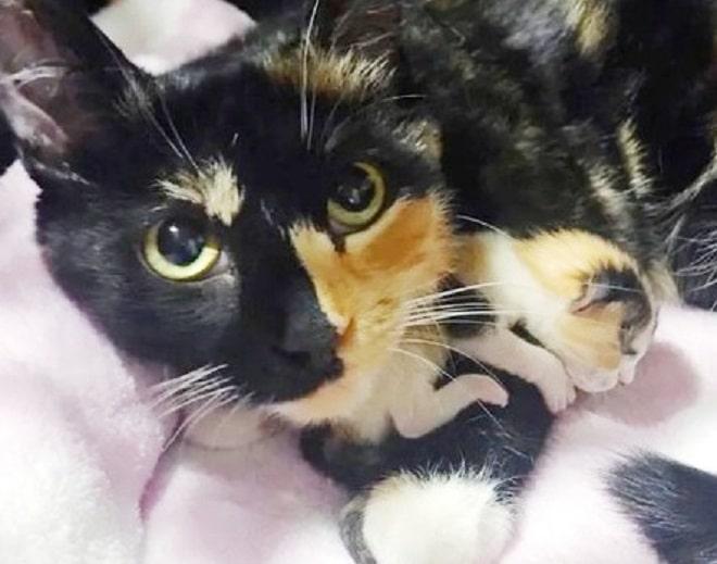 Кошка охраняет котенка