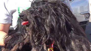 black matted dog