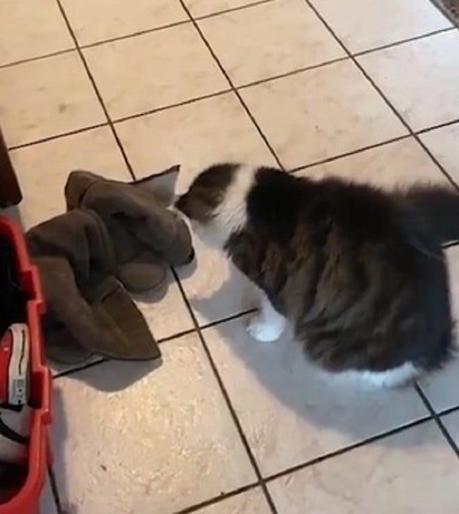 Кошка и тень