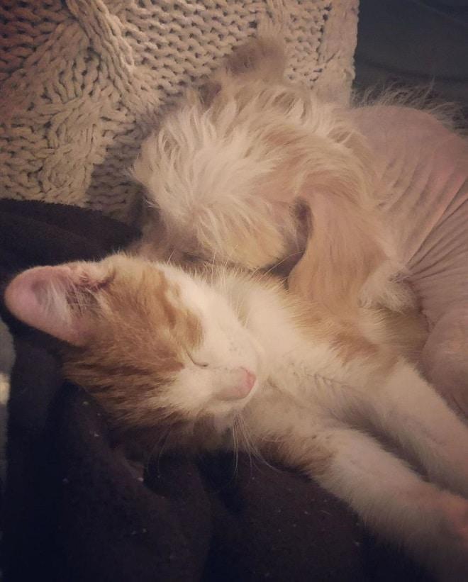 Пес и котенок