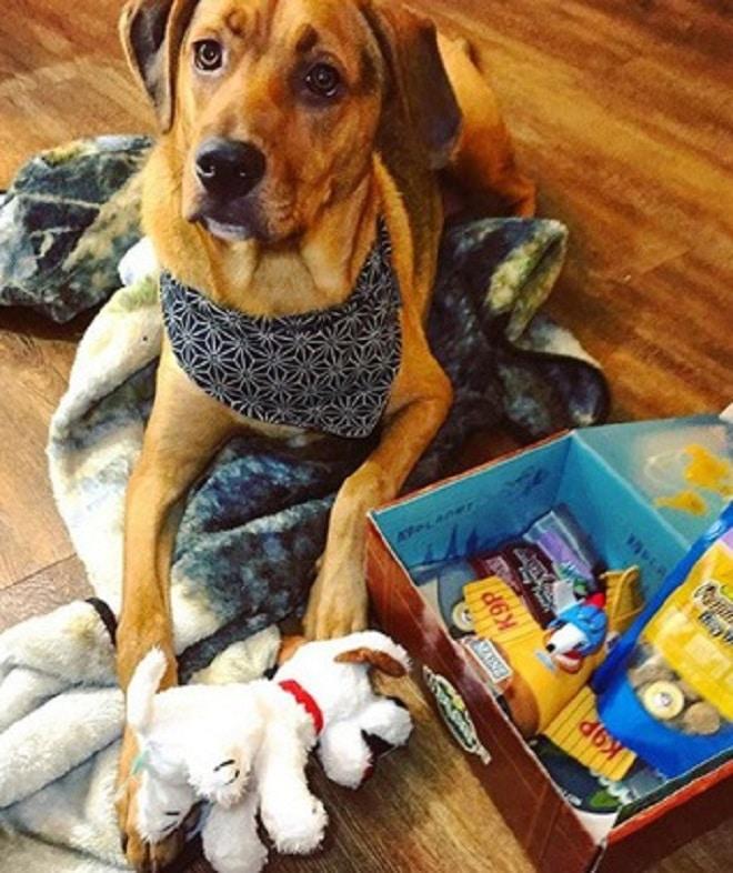 Собака с игрушками
