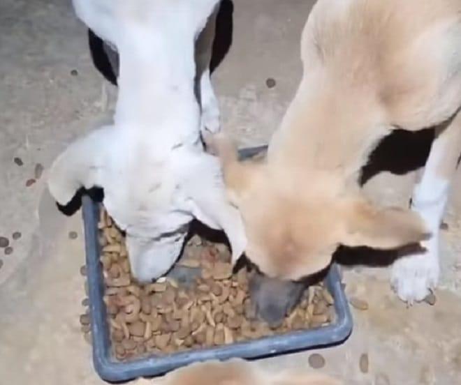 Щенков кормят