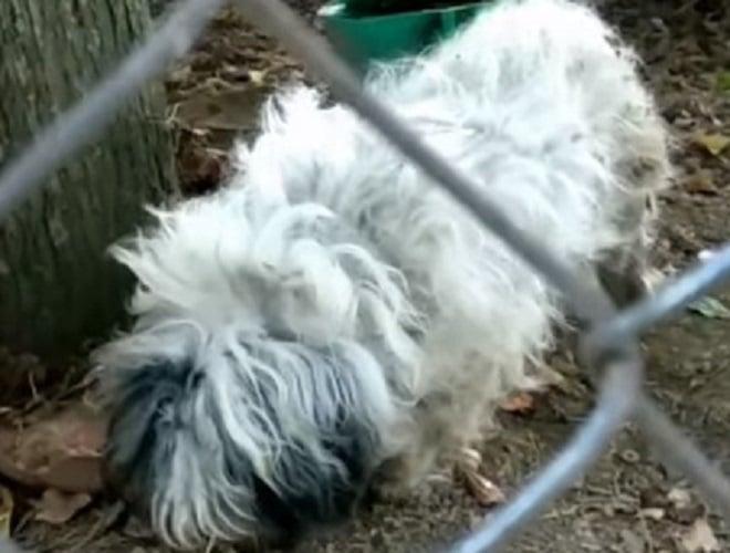 Лохматая собака