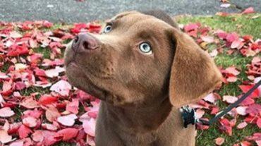 green eyed dog