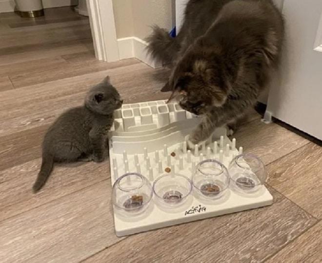 Коты играют