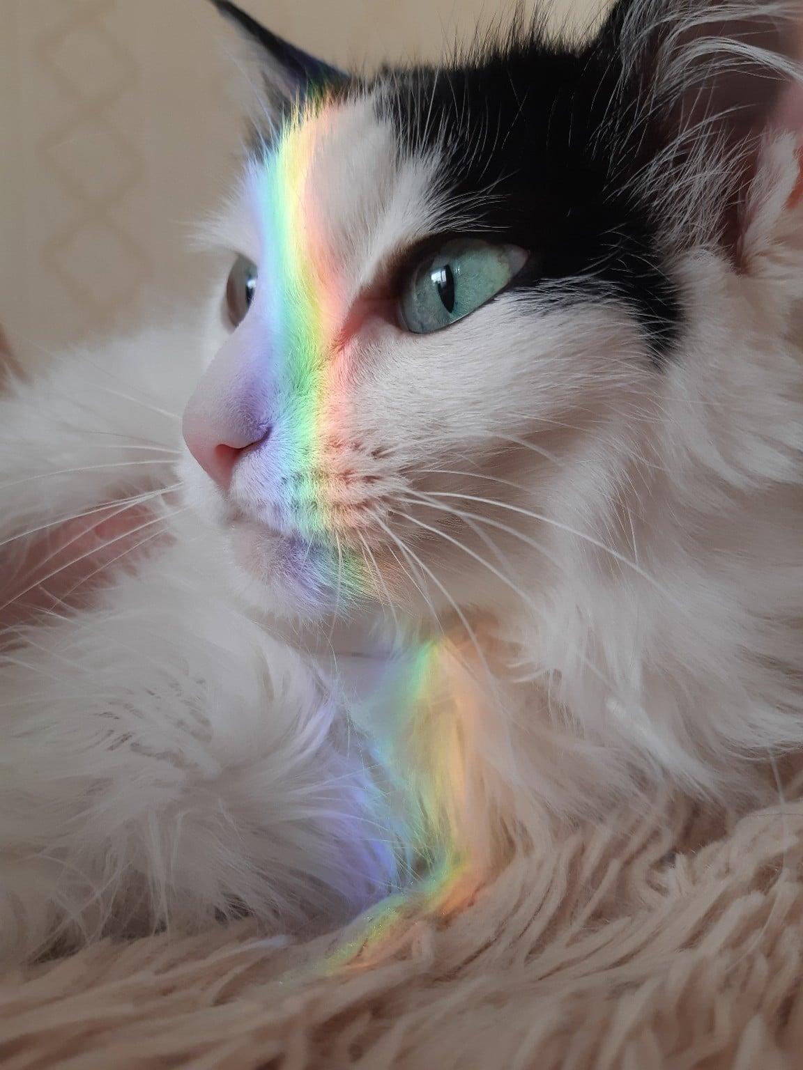 кошка и радуга