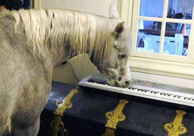 лошадь в доме