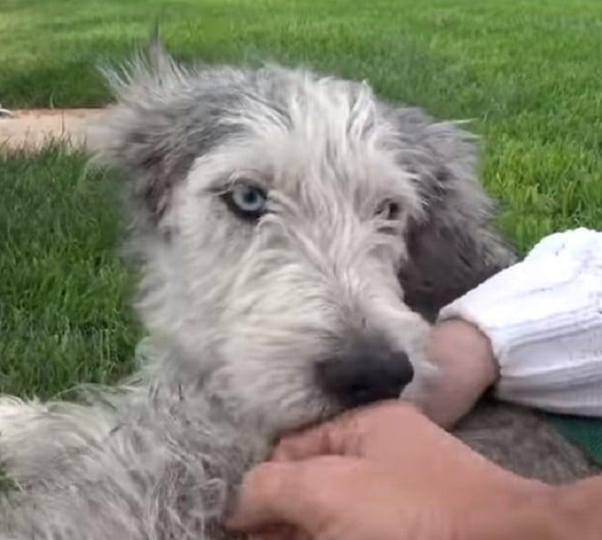 Собака и руки