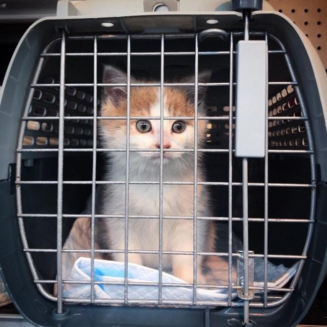 Котенок за решеткой