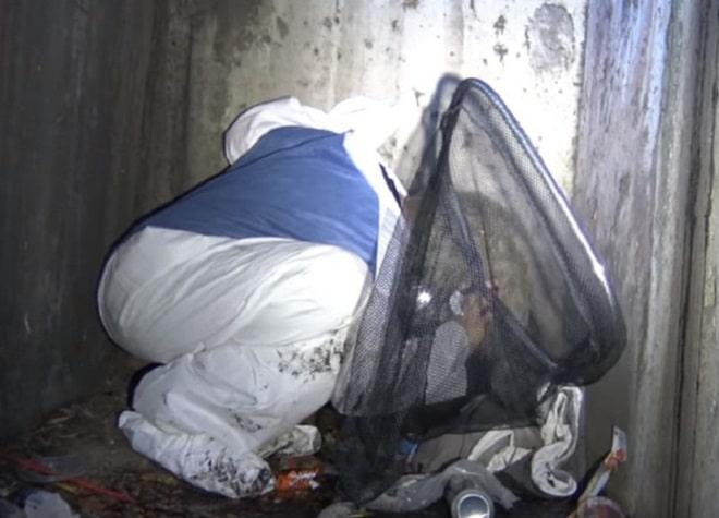 Волонтер в мусоре