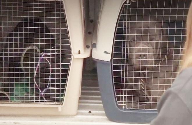Собаки в переносках