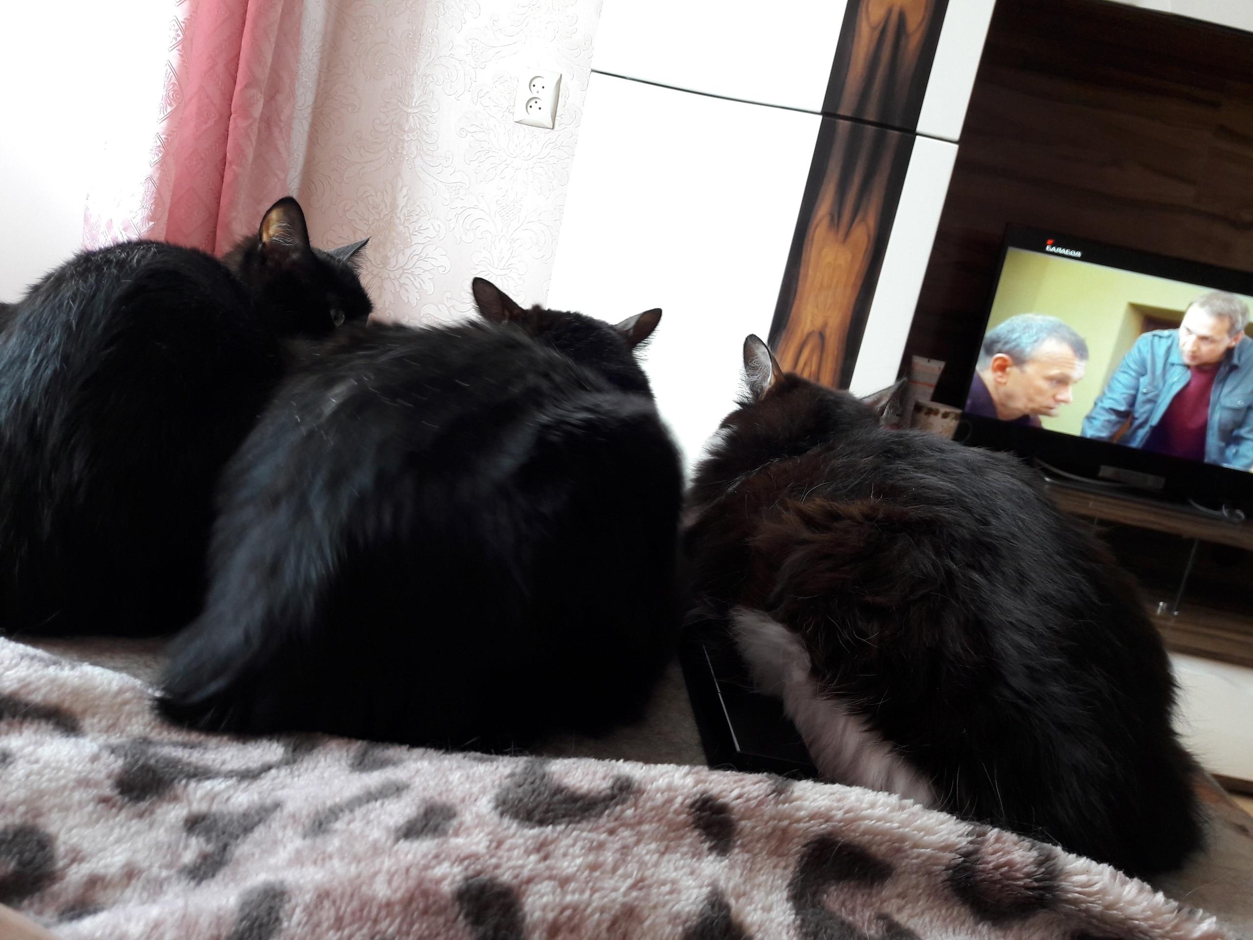 три кота