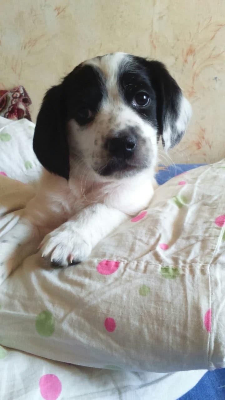 чёрно-белый щенок