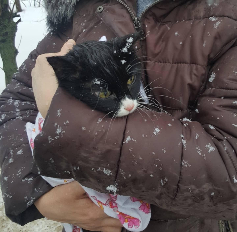 спасённая кошка