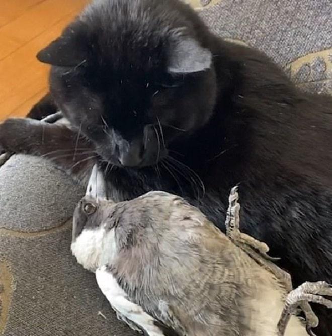 Сорока и кот
