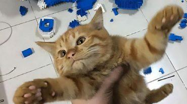 cat, the rascal