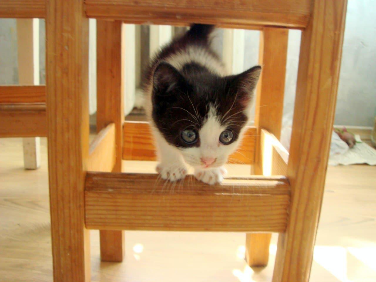 котёнок под стулом