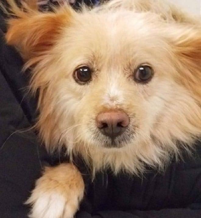 Собака с грустными глазами
