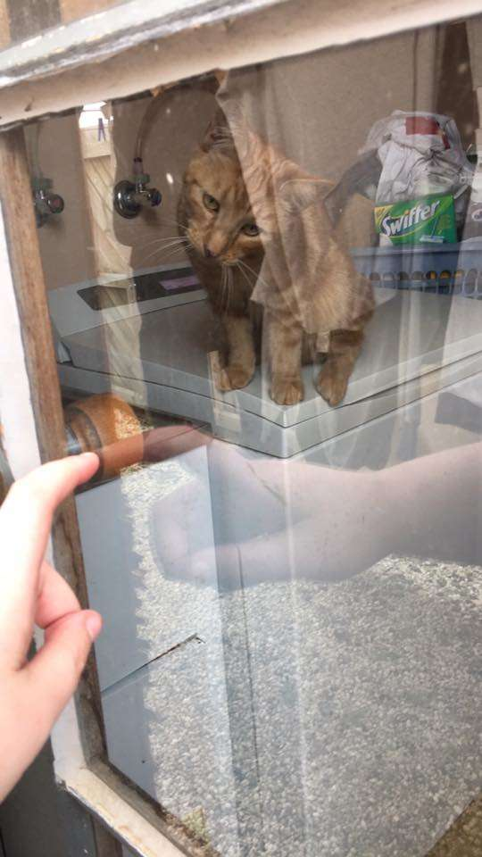 кошка за окном