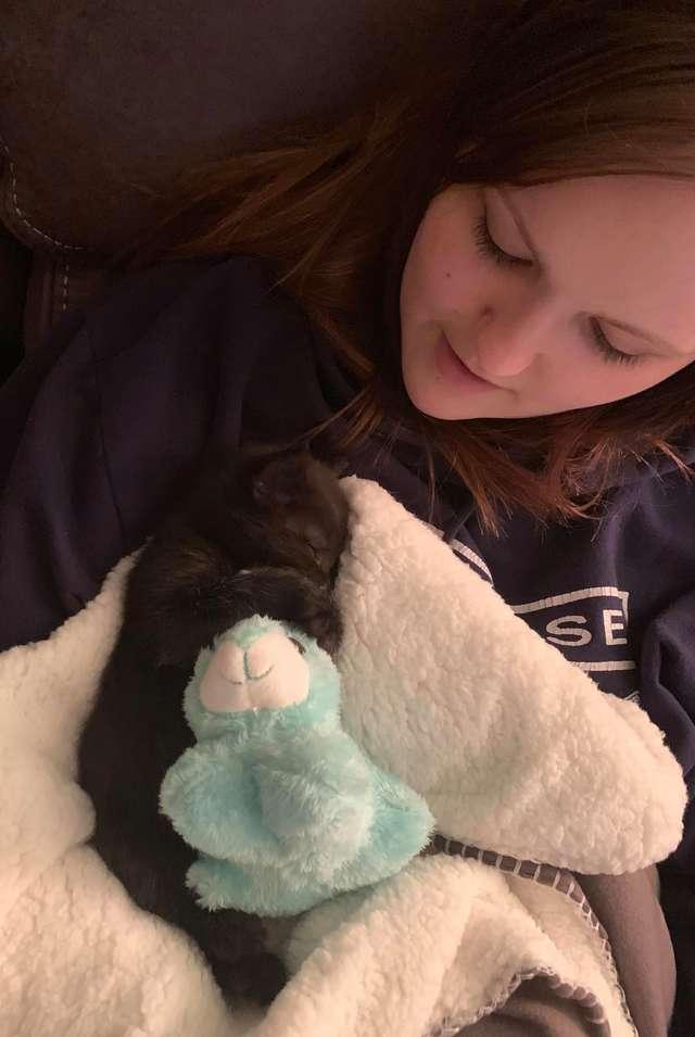 котёнок в одеяле