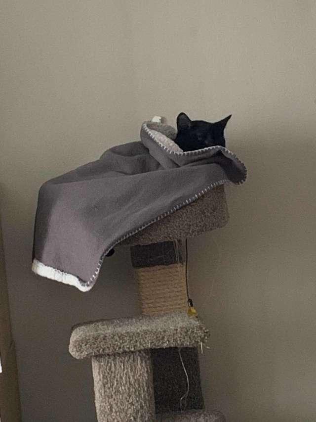 кот с одеялом