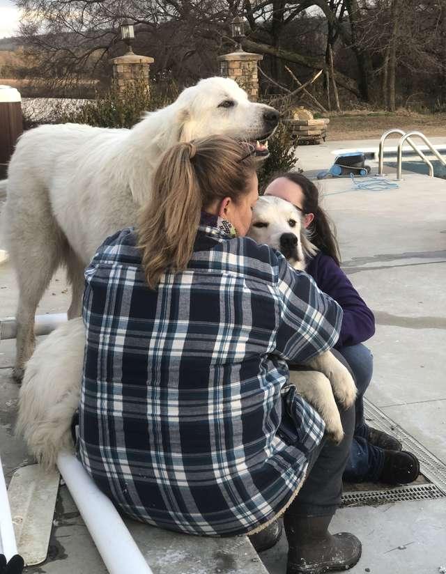 хозяйка с собаками