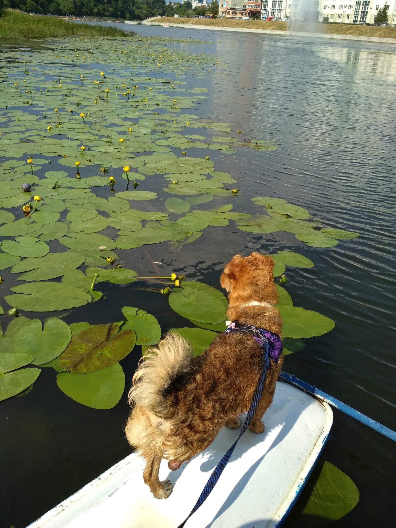 собака на речке