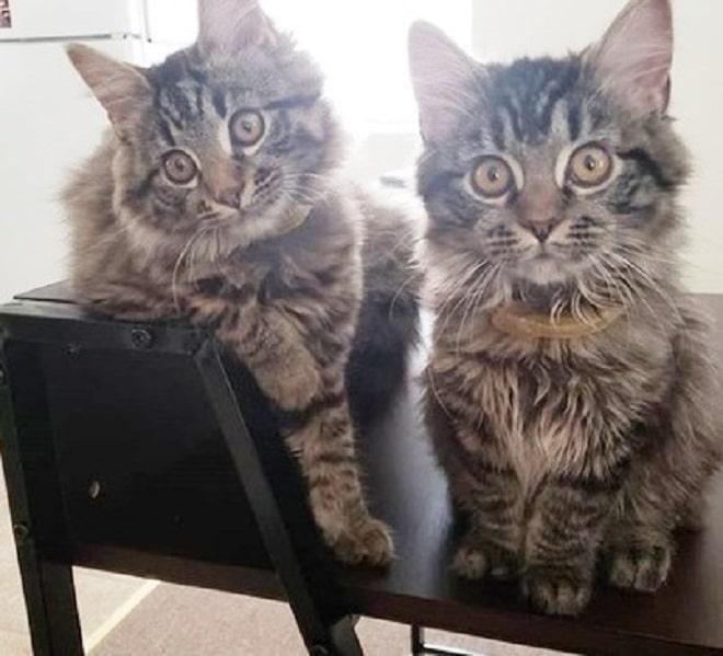 Коты сидят