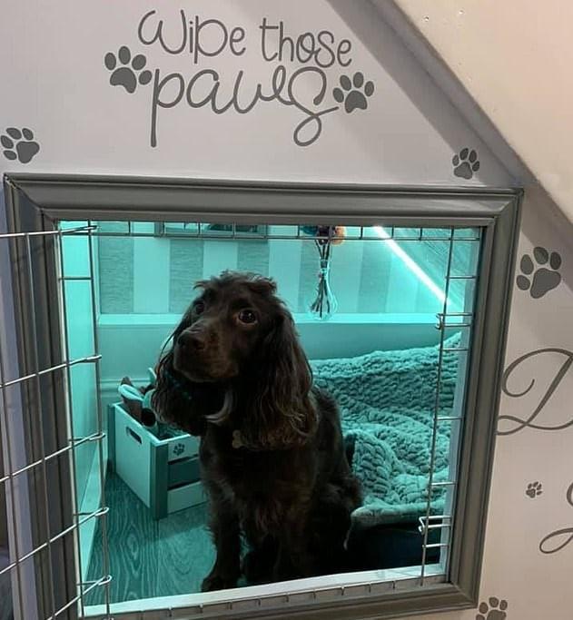 собака в домике
