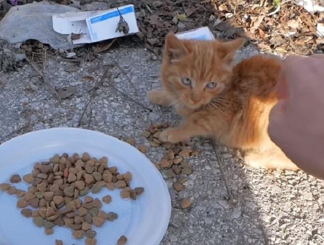 Котенок и еда