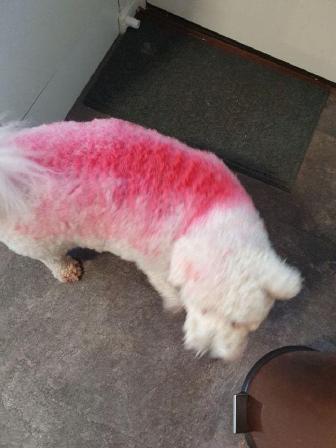 Розовая полоса на собаке