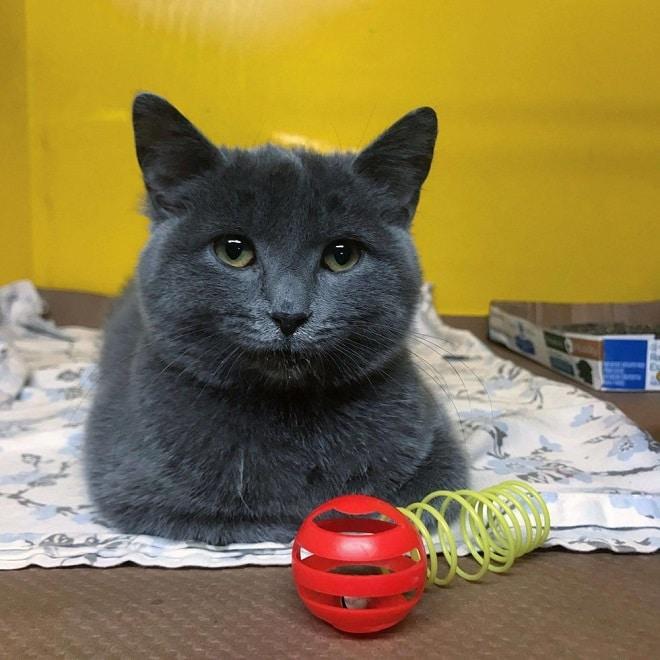 Котенок и игрушки