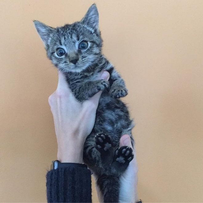 Котенок в воздухе
