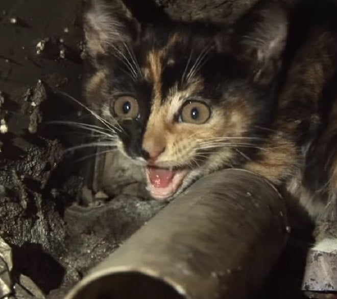 Испуганный котенок