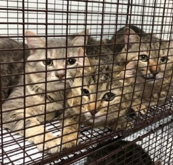 Коты за решеткой