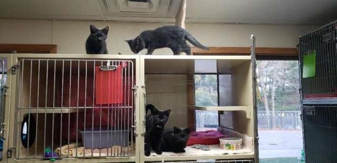Котята на клетке