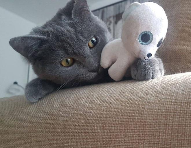 Котенок с игрушкой