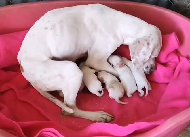 Щенки с мамой
