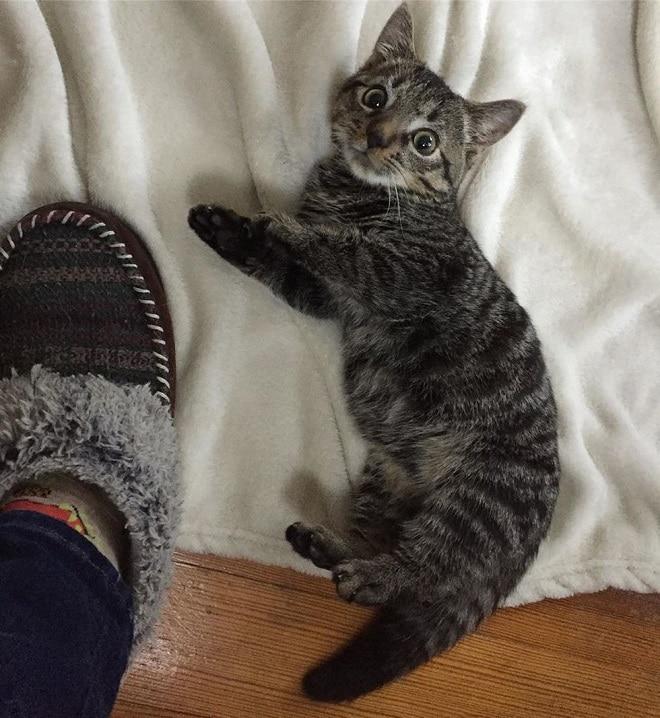 Котенок и нога