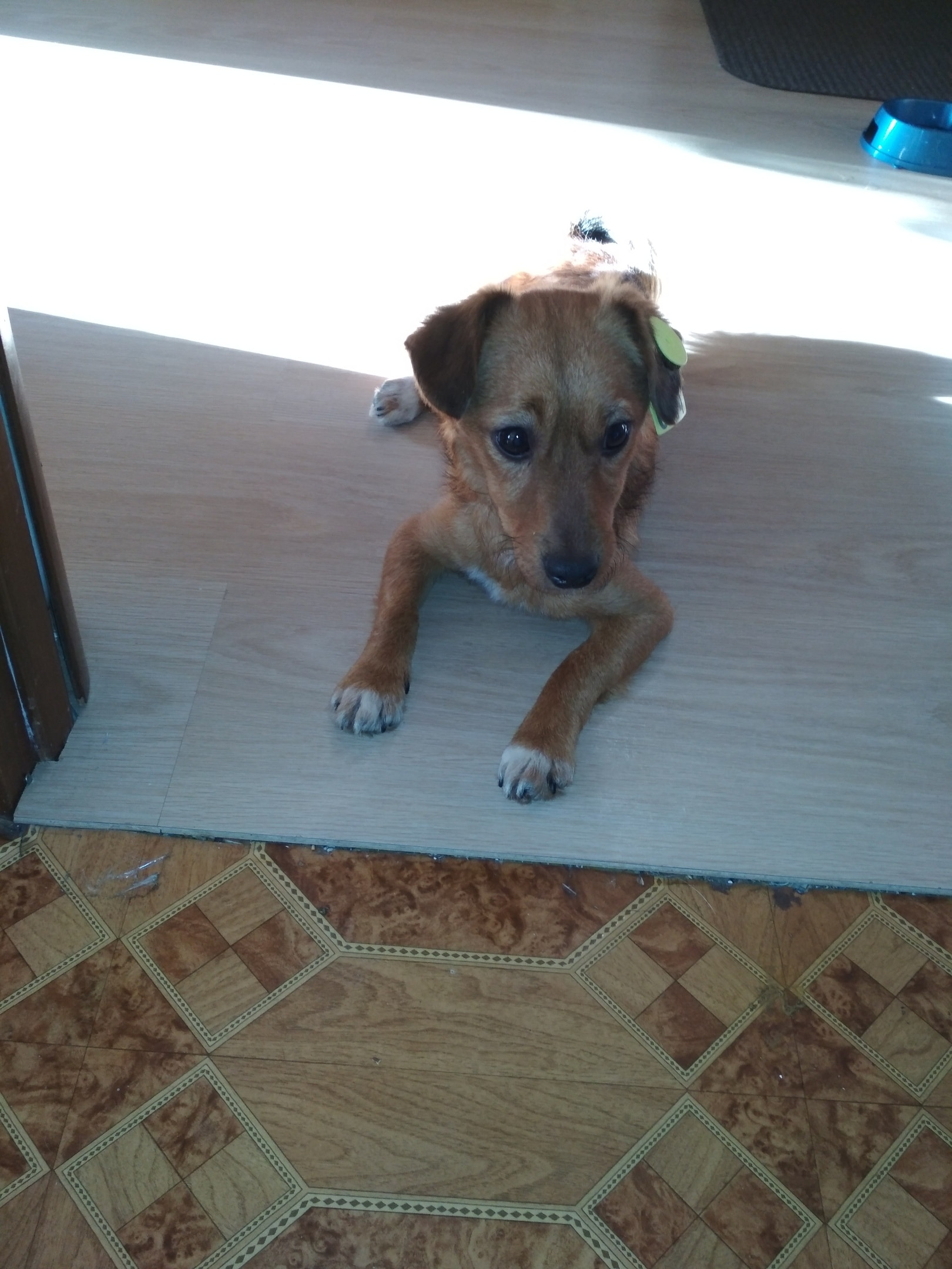 пёс в доме