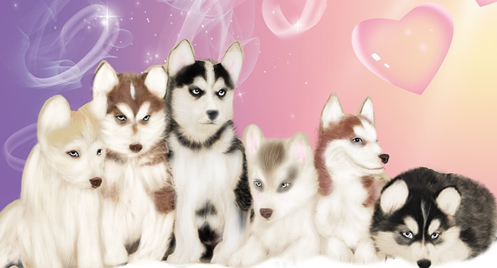 fresh and beautiful pet dog_1003041