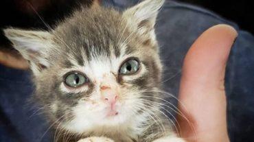 green eyed Winky