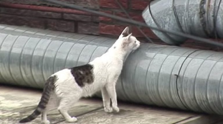 kitty by the pipe