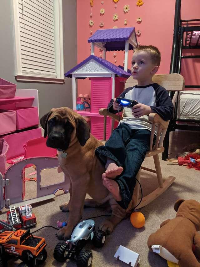 мальчик и пёс