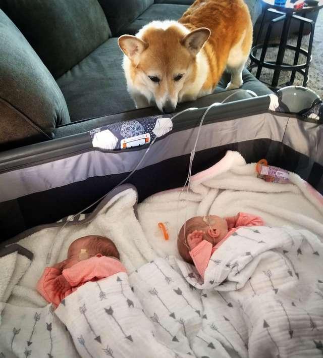 собака и младенцы