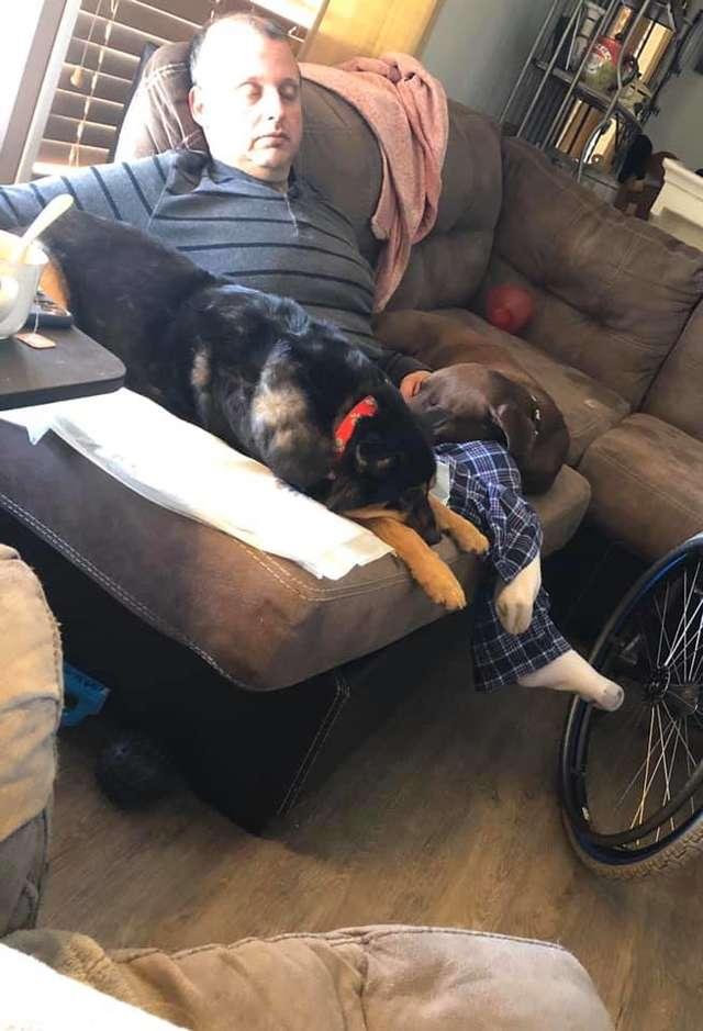 собаки с хозяином